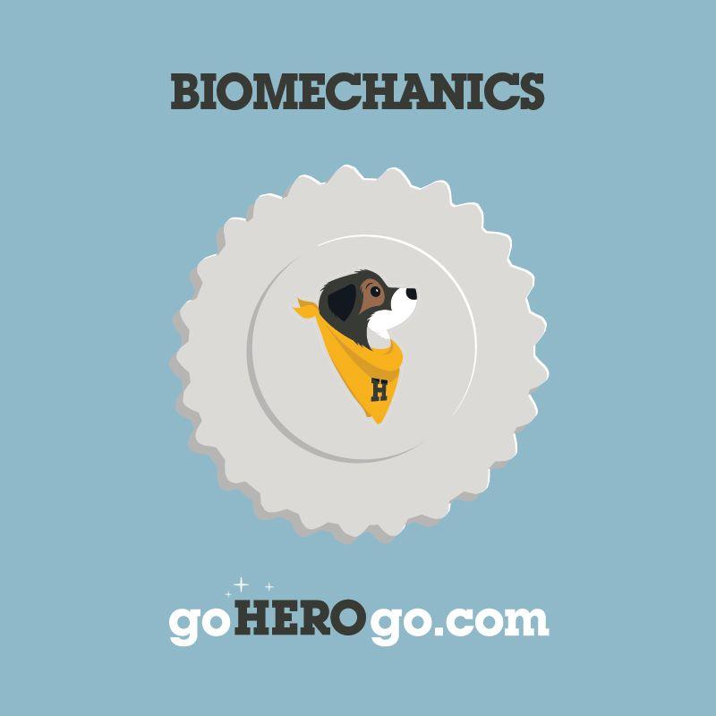 Canine Biomechanics image for goherogo.com